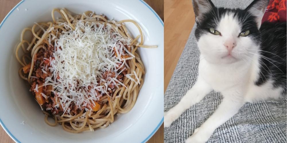 Links ein Teller mit Spaghetti Bolognese udn Grana. Rechts eine hungrid drein schauende Katze auf dem Soa neben dem Tisch.